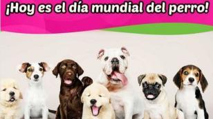 Día mundial del perro: 5 trucos para cuidarlos
